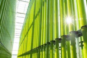 Green Technology: Mikroalgen aus Niederösterreich
