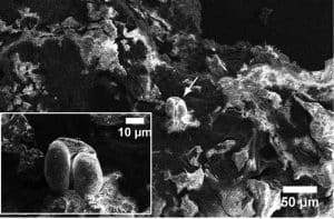 Neue Proteinanalyse-Methode offenbart prähistorisches Fischrezept