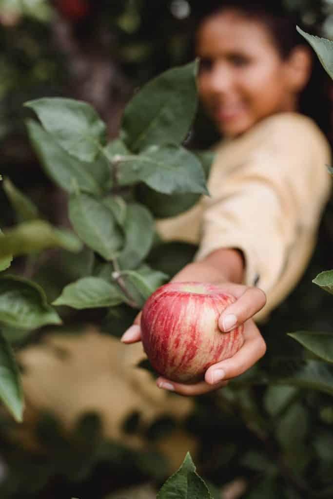 """In einer weltweiten Studie wurde das Mikrobiom von Äpfeln der Sorte """"Royal Gala"""" untersucht   Foto: pexels.com"""