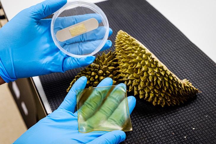 Hydrogelpflaster und Pflaster aus der Schale der Durian-Frucht | Foto: NTU