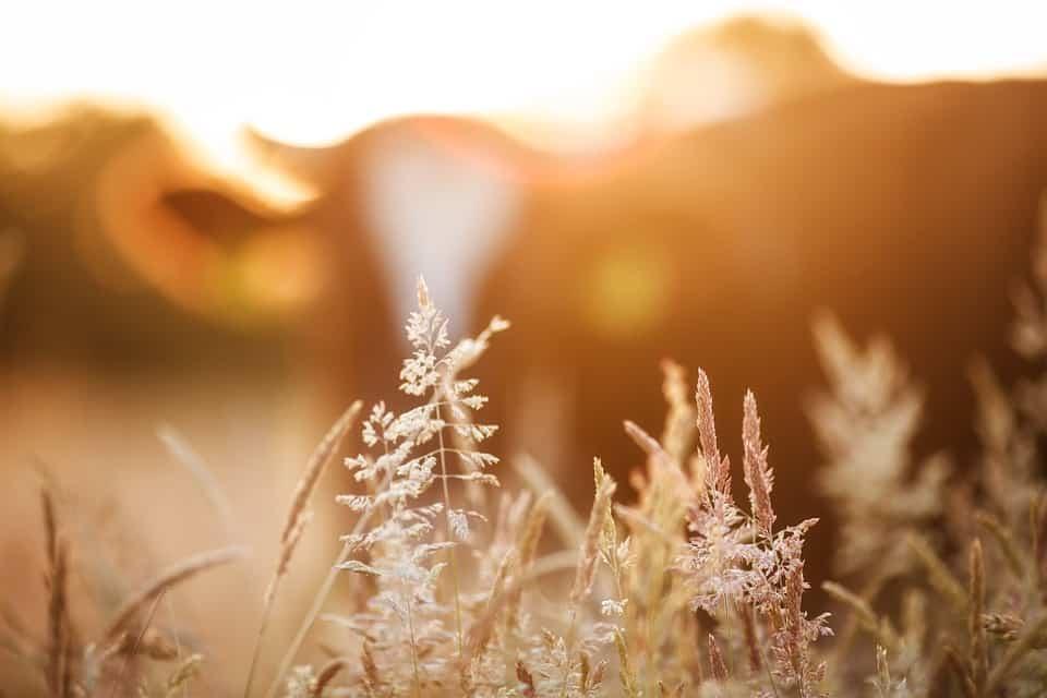 DSM fördert Nachhaltigkeit in der Nutztierhaltung   Foto: Intuitivmedia, pixabay