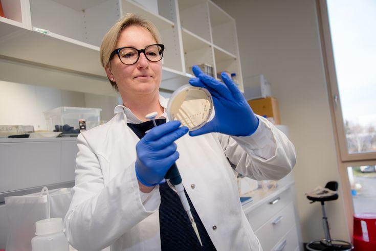 Plastik Abbau dank Bakterien aus Kuhmägen - Doris Ribitsch forscht am Institut für Umweltbiotechnologie an der BOKU in Tulln   Foto: www.Fischer-Media.at