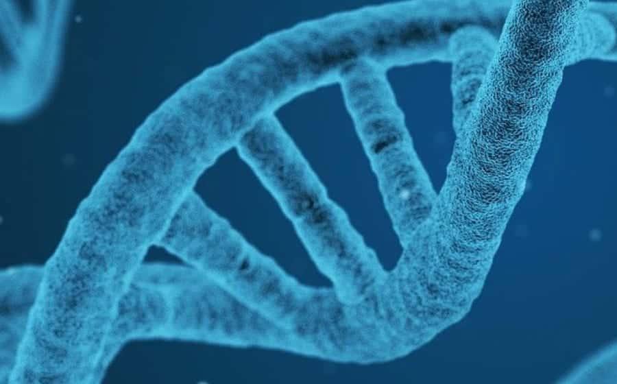 Genome | Foto: Veritas International