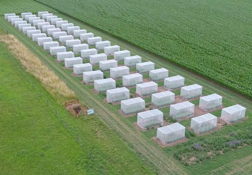Überblick eines Versuchsaufbaus, mit dem das Forschungsteam die Reproduktion der Wildbienen untersucht hat.   Foto: Felix Klaus